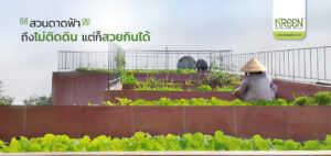 IDEA: การทำแปลงผักปลอดสารพิษ